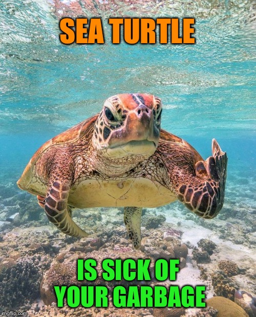 The shell with you! | SEA TURTLE IS SICK OF YOUR GARBAGE | image tagged in grumpy sea turtle,flipping the bird,ocean,pollution,funny memes | made w/ Imgflip meme maker
