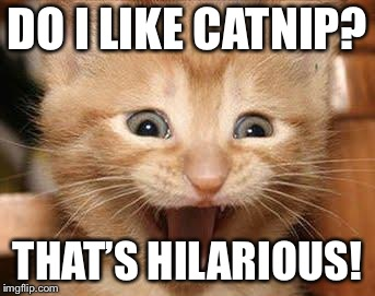 Excited Cat | DO I LIKE CATNIP? THAT'S HILARIOUS! | image tagged in memes,excited cat | made w/ Imgflip meme maker