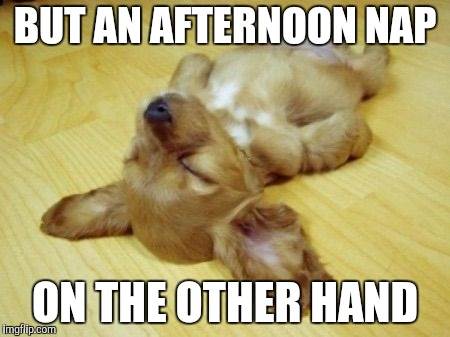 Passed out Puppy | BUT AN AFTERNOON NAP ON THE OTHER HAND | image tagged in passed out puppy | made w/ Imgflip meme maker