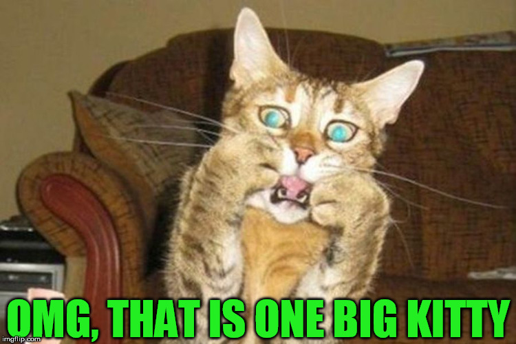 shocked cat | OMG, THAT IS ONE BIG KITTY | image tagged in shocked cat | made w/ Imgflip meme maker