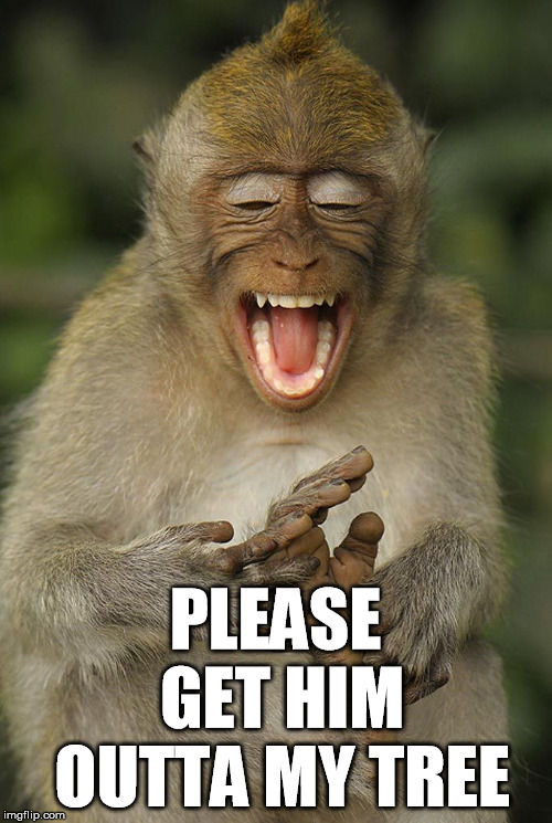laughing monkey | PLEASE GET HIM OUTTA MY TREE | image tagged in laughing monkey | made w/ Imgflip meme maker
