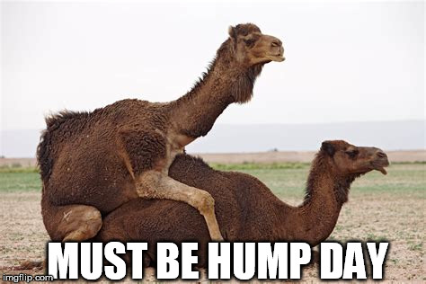 hump day | MUST BE HUMP DAY | image tagged in hump day | made w/ Imgflip meme maker
