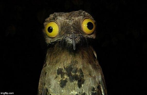 Weird Stuff I Do Potoo Meme | image tagged in memes,weird stuff i do potoo | made w/ Imgflip meme maker