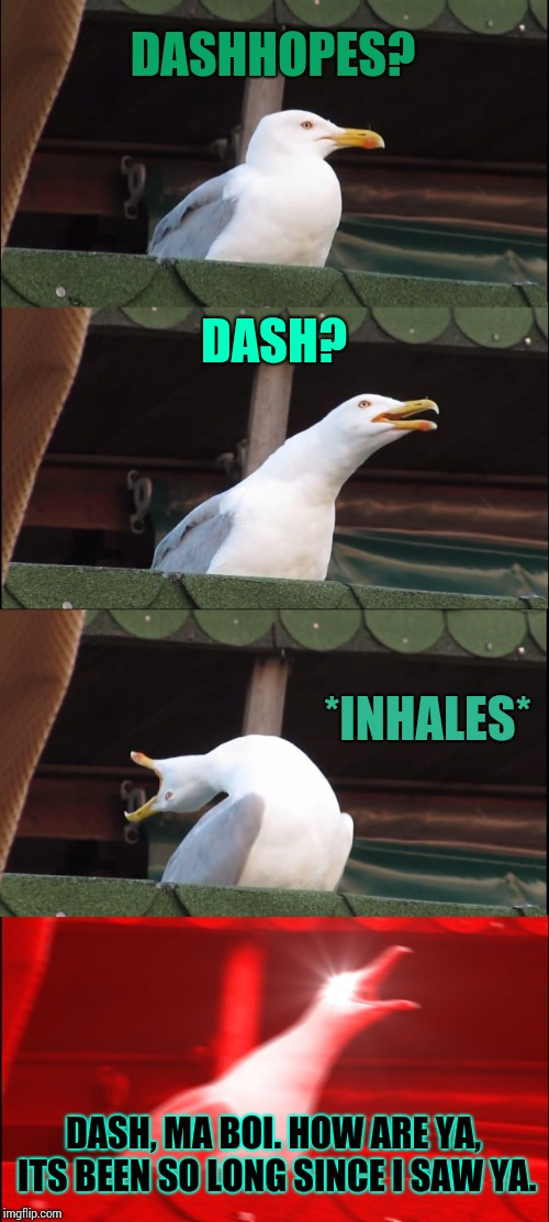 Inhaling Seagull Meme | DASHHOPES? DASH? *INHALES* DASH, MA BOI. HOW ARE YA, ITS BEEN SO LONG SINCE I SAW YA. | image tagged in memes,inhaling seagull | made w/ Imgflip meme maker