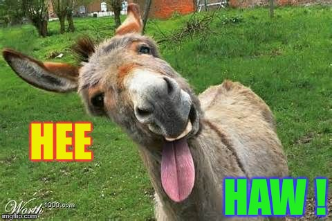 Laughing Donkey | HEE HAW ! | image tagged in laughing donkey | made w/ Imgflip meme maker
