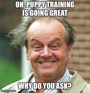 Jack Nicholson Crazy Hair | OH, PUPPY TRAINING IS GOING GREAT WHY DO YOU ASK? | image tagged in jack nicholson crazy hair | made w/ Imgflip meme maker