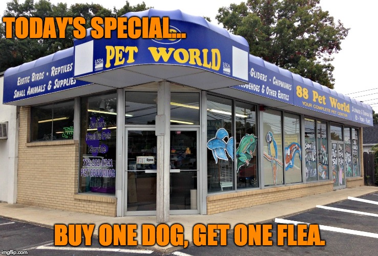 BOGO | TODAY'S SPECIAL... BUY ONE DOG, GET ONE FLEA. | image tagged in pets | made w/ Imgflip meme maker