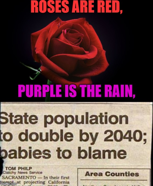 Babies: I have no regrets | ROSES ARE RED, PURPLE IS THE RAIN, | image tagged in memes,funny,roses are red,news,babies,purple rain | made w/ Imgflip meme maker