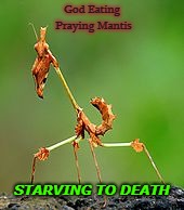 God Eating Praying Mantis; STARVING TO DEATH | image tagged in praying mantis | made w/ Imgflip meme maker