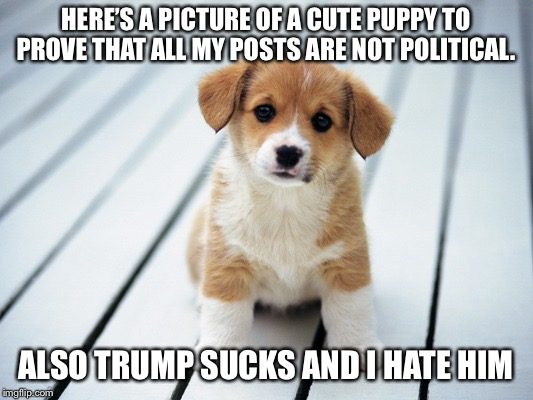 Cute puppy hates trump | HERE'S A PICTURE OF A CUTE PUPPY TO PROVE THAT ALL MY POSTS ARE NOT POLITICAL. ALSO TRUMP SUCKS AND I HATE HIM | image tagged in cute puppy 1,i hate trump meme,trump meme,anti trump,political meme | made w/ Imgflip meme maker