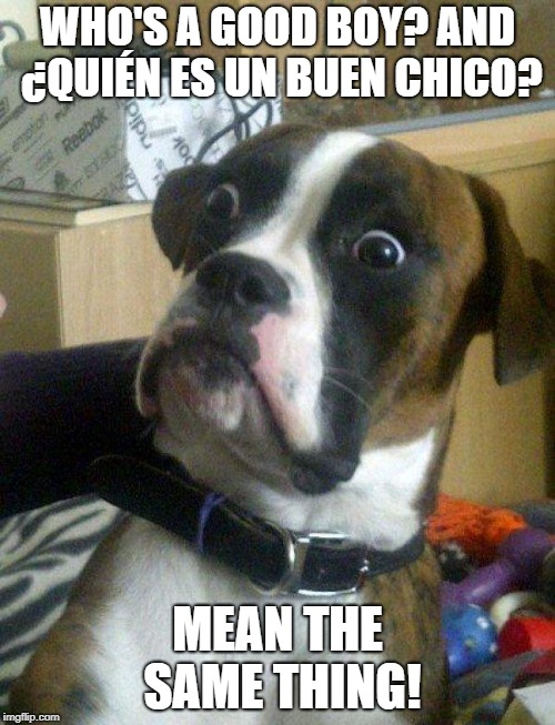 Blankie the Shocked Dog | WHO'S A GOOD BOY? AND ¿QUIÉN ES UN BUEN CHICO? MEAN THE SAME THING! | image tagged in blankie the shocked dog | made w/ Imgflip meme maker