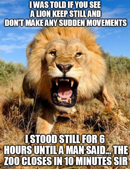 lion | I WAS TOLD IF YOU SEE A LION KEEP STILL AND DON'T MAKE ANY SUDDEN MOVEMENTS I STOOD STILL FOR 6 HOURS UNTIL A MAN SAID... THE ZOO CLOSES IN  | image tagged in lion | made w/ Imgflip meme maker