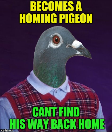 Bird Weekend February 1-3, a moemeobro, Claybourne, and 1forpeace Event | BECOMES A HOMING PIGEON CANT FIND HIS WAY BACK HOME | image tagged in memes,bird weekend,bird,birds,pigeon,bad luck brian | made w/ Imgflip meme maker