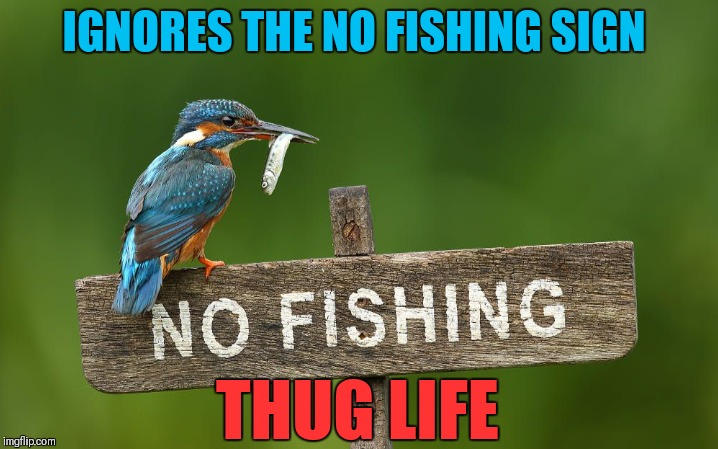 Bird Weekend February 1-3, a moemeobro, claybourne, and 1forpiece event | IGNORES THE NO FISHING SIGN THUG LIFE | image tagged in memes,bird weekend,thug life,funny,fishing,birds | made w/ Imgflip meme maker