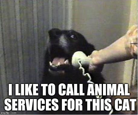 Yes this is dog | I LIKE TO CALL ANIMAL SERVICES FOR THIS CAT | image tagged in yes this is dog | made w/ Imgflip meme maker