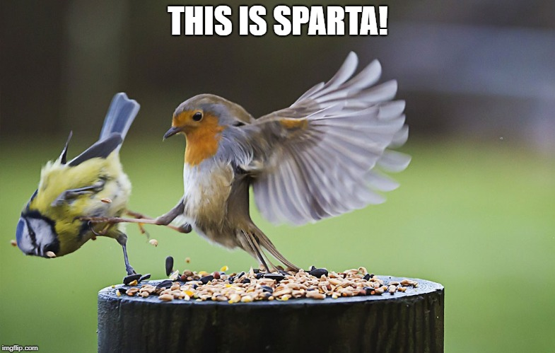 this is sparta | THIS IS SPARTA! | image tagged in memes,this is sparta,birds | made w/ Imgflip meme maker