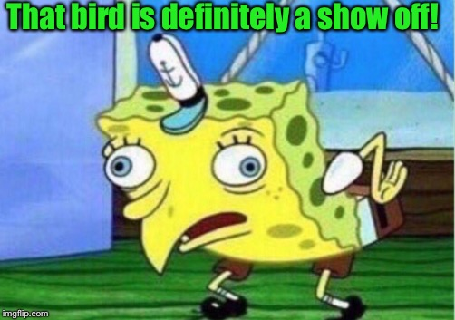 Mocking Spongebob Meme | That bird is definitely a show off! | image tagged in memes,mocking spongebob | made w/ Imgflip meme maker