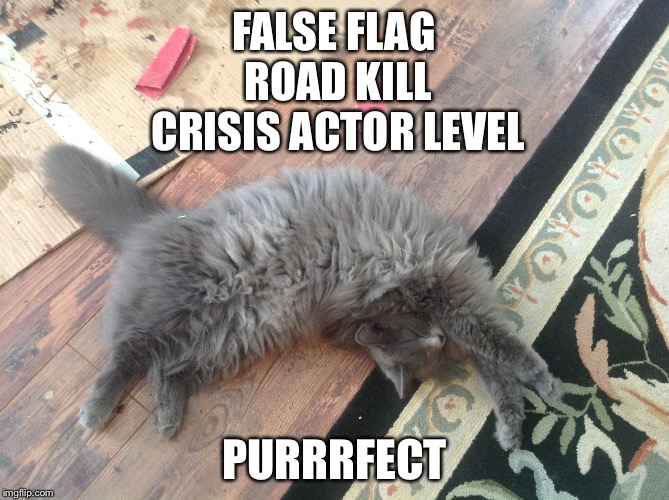 That Pose You Take When You Slip On That Banana Peel You Brungwitchoo | FALSE FLAG ROAD KILL CRISIS ACTOR LEVEL PURRRFECT | image tagged in cats,pets,false flag,injury,ninja | made w/ Imgflip meme maker