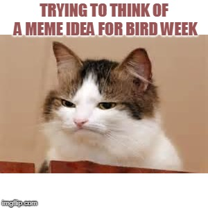 I have no ideas! | TRYING TO THINK OF A MEME IDEA FOR BIRD WEEK | image tagged in disappointed cat,nixieknox,memes,cats | made w/ Imgflip meme maker
