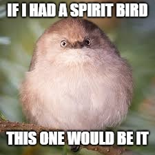 Happy bird week 1st-3rd. | IF I HAD A SPIRIT BIRD THIS ONE WOULD BE IT | image tagged in bird week,fat bird,i'm a loser | made w/ Imgflip meme maker