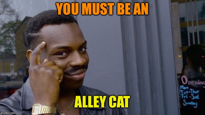 Roll Safe Think About It Meme | YOU MUST BE AN ALLEY CAT | image tagged in memes,roll safe think about it | made w/ Imgflip meme maker