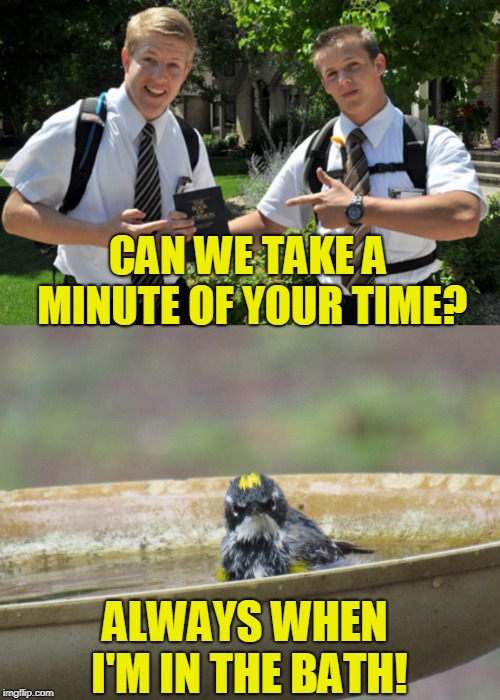 Bird Weekend February 1-3, a moemeobro, Claybourne, and 1forpeace Event | CAN WE TAKE A MINUTE OF YOUR TIME? ALWAYS WHEN I'M IN THE BATH! | image tagged in bird weekend,angry birds,humor,funny | made w/ Imgflip meme maker