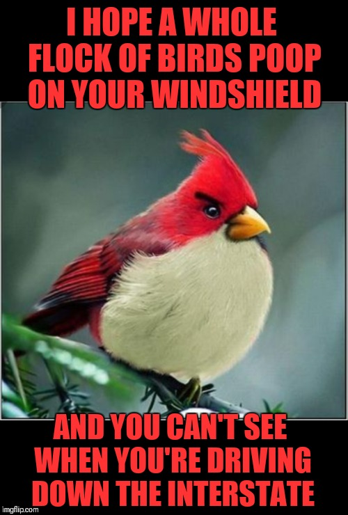 Grumpy Bird... Bird Weekend February 1-3, a moemeobro, claybourne, and 1forpiece event | I HOPE A WHOLE FLOCK OF BIRDS POOP ON YOUR WINDSHIELD AND YOU CAN'T SEE WHEN YOU'RE DRIVING DOWN THE INTERSTATE | image tagged in memes,funny,bird weekend,angry birds,44colt,cardinals | made w/ Imgflip meme maker