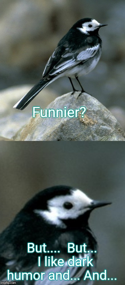Clinically Depressed Pied Wagtail | Funnier? But....  But...  I like dark humor and... And... | image tagged in clinically depressed pied wagtail | made w/ Imgflip meme maker