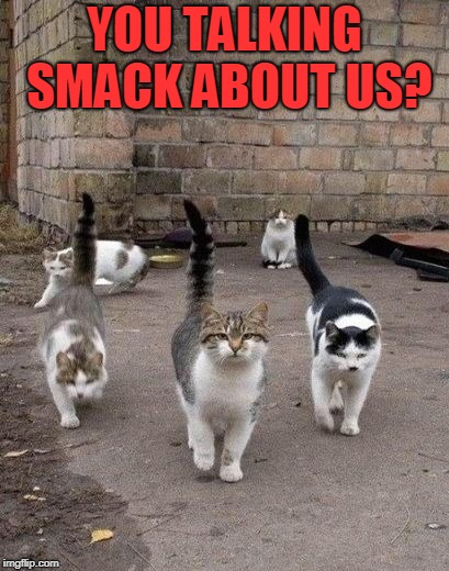 Alley Cats | YOU TALKING SMACK ABOUT US? | image tagged in alley cats | made w/ Imgflip meme maker