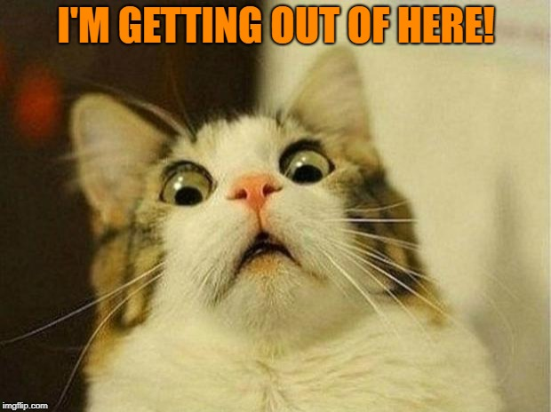 Scared Cat Meme | I'M GETTING OUT OF HERE! | image tagged in memes,scared cat | made w/ Imgflip meme maker