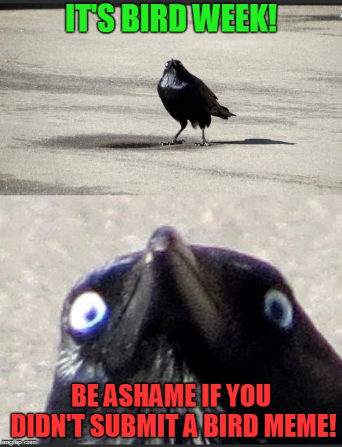 Bird Weekend February 1-3, a moemeobro, Claybourne, and 1forpeace Event! ThanksDashHopes for greasing the wheels! | IT'S BIRD WEEK! BE ASHAME IF YOU DIDN'T SUBMIT A BIRD MEME! | image tagged in insanity crow,nixieknox,memes,bird week | made w/ Imgflip meme maker