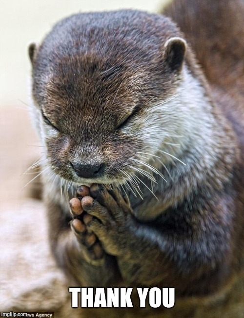 Thank you Lord Otter | THANK YOU | image tagged in thank you lord otter | made w/ Imgflip meme maker