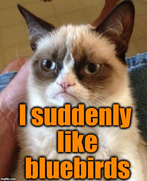 Grumpy Cat Meme | I suddenly like bluebirds | image tagged in memes,grumpy cat | made w/ Imgflip meme maker
