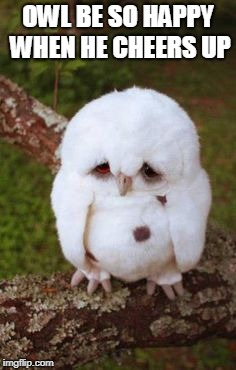 Sad Bird | OWL BE SO HAPPY WHEN HE CHEERS UP | image tagged in sad bird | made w/ Imgflip meme maker