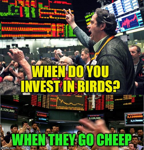 WHEN DO YOU INVEST IN BIRDS? WHEN THEY GO CHEEP | made w/ Imgflip meme maker