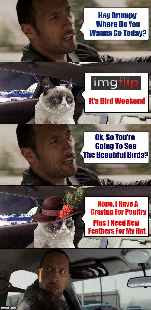 "Oh No! Hide Yo Birds, Grumpy Cat Is Coming For Dinner! ""Bird Weekend"" 