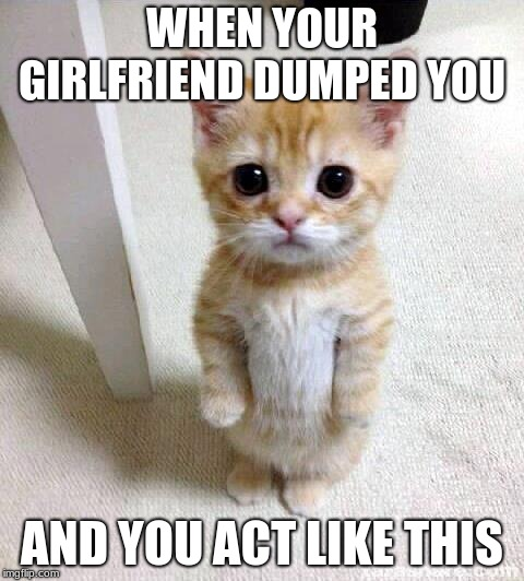 Cute Cat | WHEN YOUR GIRLFRIEND DUMPED YOU AND YOU ACT LIKE THIS | image tagged in memes,cute cat | made w/ Imgflip meme maker