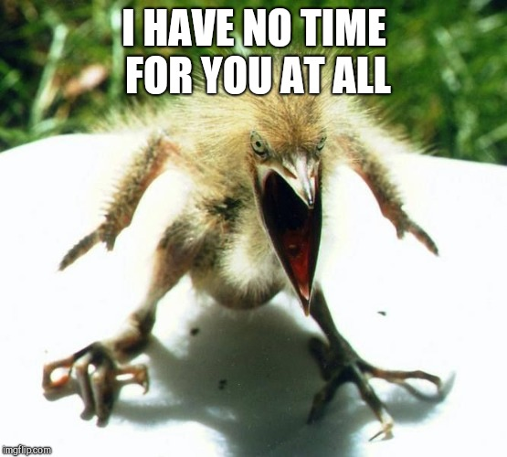 Angry bird | I HAVE NO TIME FOR YOU AT ALL | image tagged in angry bird | made w/ Imgflip meme maker