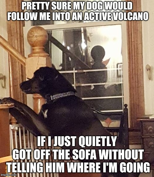 PRETTY SURE MY DOG WOULD FOLLOW ME INTO AN ACTIVE VOLCANO IF I JUST QUIETLY GOT OFF THE SOFA WITHOUT TELLING HIM WHERE I'M GOING | image tagged in sofa,dog,following | made w/ Imgflip meme maker