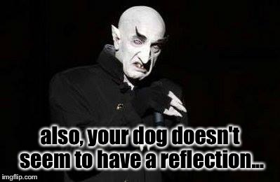 vampire | also, your dog doesn't seem to have a reflection... | image tagged in vampire | made w/ Imgflip meme maker
