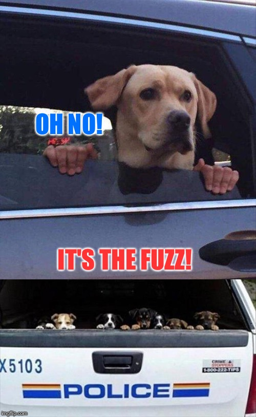 Yeah, I know I'm showing my age. | OH NO! IT'S THE FUZZ! | image tagged in dogs,police,memes,funny | made w/ Imgflip meme maker