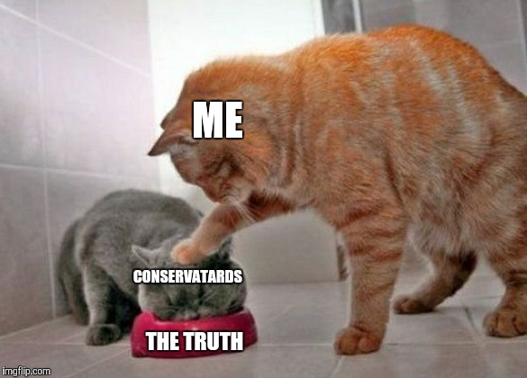 Too bad they just spit it all out and lose their shit. -_- | ME CONSERVATARDS THE TRUTH | image tagged in force feed cat,you can't handle the truth,stupid conservatives,the truth,the truth hurts,alt right | made w/ Imgflip meme maker