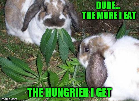 DUDE... THE MORE I EAT THE HUNGRIER I GET | made w/ Imgflip meme maker