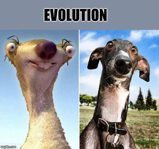 evolution |  EVOLUTION | image tagged in sid,dog,lookalike | made w/ Imgflip meme maker