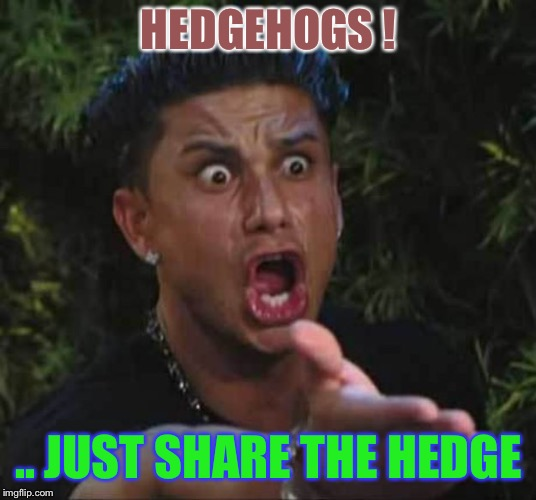 Not so super..sonic. | HEDGEHOGS ! .. JUST SHARE THE HEDGE | image tagged in jersey shore,hedgehog,really youre reading the tags | made w/ Imgflip meme maker