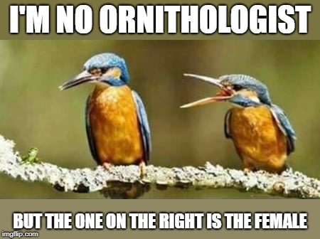 Bird Weekend February 1-3, a moemeobro, Claybourne, and 1forpeace Event |  I'M NO ORNITHOLOGIST; BUT THE ONE ON THE RIGHT IS THE FEMALE | image tagged in birds,bird,memes,dank memes | made w/ Imgflip meme maker