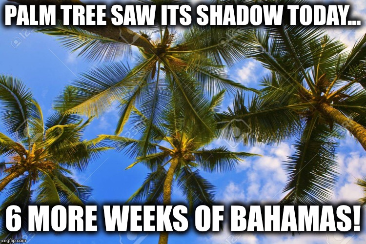 Happy Groundhogs Day! | PALM TREE SAW ITS SHADOW TODAY... 6 MORE WEEKS OF BAHAMAS! | image tagged in groundhog day,polar vortex | made w/ Imgflip meme maker