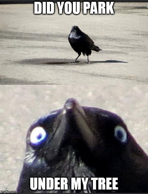 insanity crow | DID YOU PARK UNDER MY TREE | image tagged in insanity crow | made w/ Imgflip meme maker