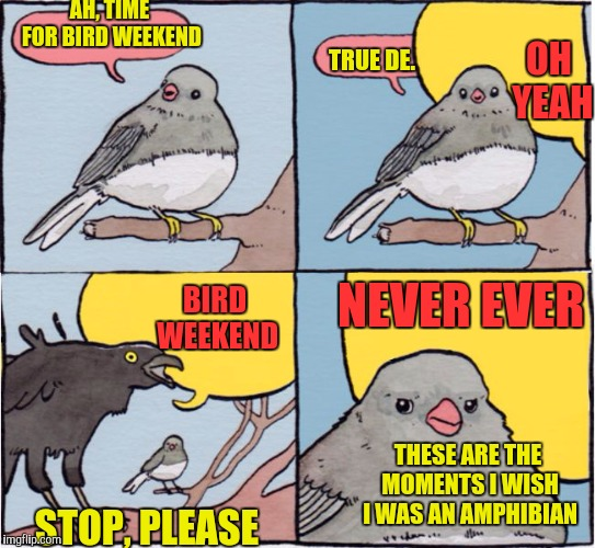 Annoyed Bird |  AH, TIME FOR BIRD WEEKEND; OH YEAH; TRUE DE. NEVER EVER; BIRD WEEKEND; THESE ARE THE MOMENTS I WISH I WAS AN AMPHIBIAN; STOP, PLEASE | image tagged in annoyed bird | made w/ Imgflip meme maker