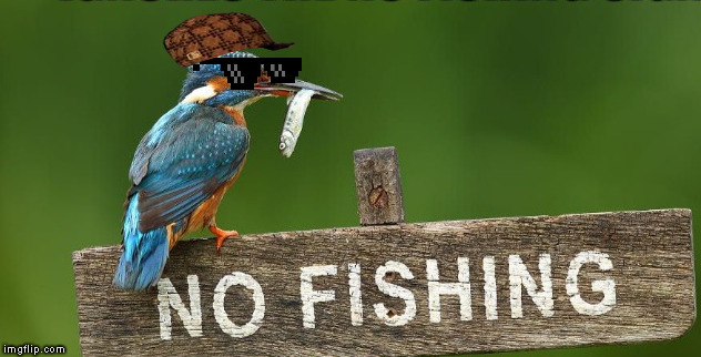 Thug Life | image tagged in memes,bird weekend,thug life,scumbag,kingfisher | made w/ Imgflip meme maker